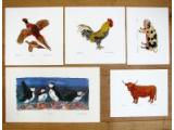 Animal & Birds Prints