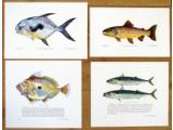 Fish Prints, freshwater & saltwater