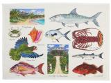 Tropical & Exoctic Tea Towels & Dish Towels