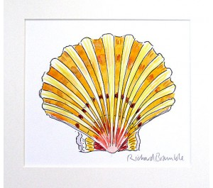 Scallop Study Original Painting