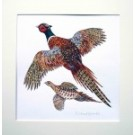 Richard Bramble Pheasants original watercolour painting