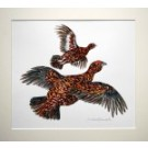 Red Grouse flying left