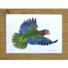 Richard Bramble Parrot Greetings Card