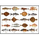Richard Bramble Sea Fish Gift Wrapping Paper