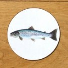 Richard Bramble Sea Trout Coaster