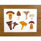 Richard Bramble Mushrooms card