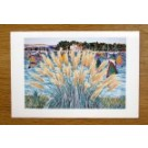 Poole Harbour - Windsurfers & Pampas Grass card