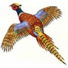 Flying Pheasant Original Painting