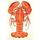 Richard Bramble Lobster (Red) Watercolour Painting