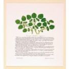 Watercress Print