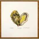 Rock Oyster Print