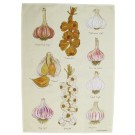 Richard Bramble Garlic Tea Towel & Dish Towel