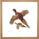 Richard Bramble Pheasant Print