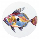 Richard Bramble John Dory Coaster