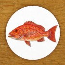 Red Snapper Coaster by Richard Bramble