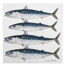 Richard Bramble Mackerel (4 fish) Greeting Card