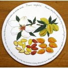 Almonds Tablemat by Richard Bramble