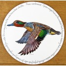 Green Winged Teal Tablemat by Richard Bramble