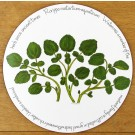 Watercress Tablemat by Richard Bramble