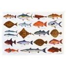 Richard Bramble North American & Tropical Sea fish Tea Towel