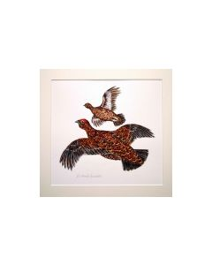 Red Grouse flying right