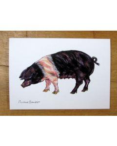 Saddleback Pig Greeting Card Richard Bramble (printed to order)