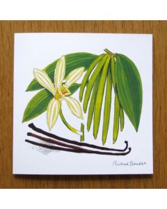 Richard Bramble Vanilla Orchid & Pod Greeting Card