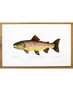 Brown Trout Print Richard Bramble