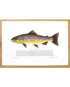 Brown Trout with text Print Richard Bramble