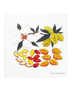 Richard Bramble Almond Blossom & Nut Greeting Card