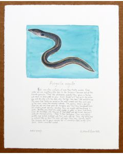 Eel swimming print blue background with text Richard Bramble