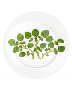 Watercress 19cm Flat Rimmed Plate