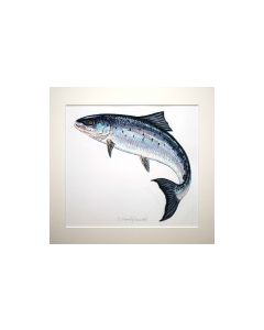 Richard Bramble Painting of a Leaping Atlantic Salmon