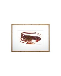 Spiny Lobster and Crayfish 2 Painting