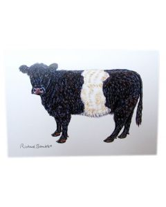 Belted Galloway Cow Greeting Card Richard Bramble