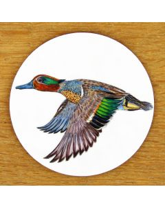 Green Winged Teal Coaster by Richard Bramble