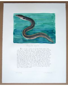 Richard Bramble Eel in water large size print