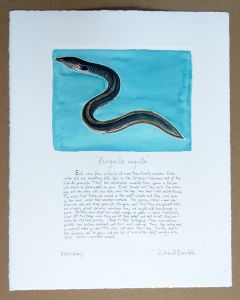 Richard Bramble Eel in water medium size print