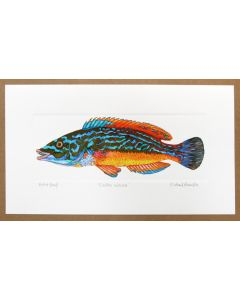 Richard Bramble Cuckoo Wrasse Print