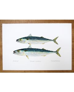 Mackerel with text print by Richard Bramble
