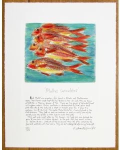 Shoal of Red Mullet with text by Richard Bramble