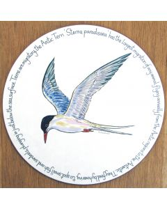 Tern Tablemat by Richard Bramble Seabirds Arctic Tern